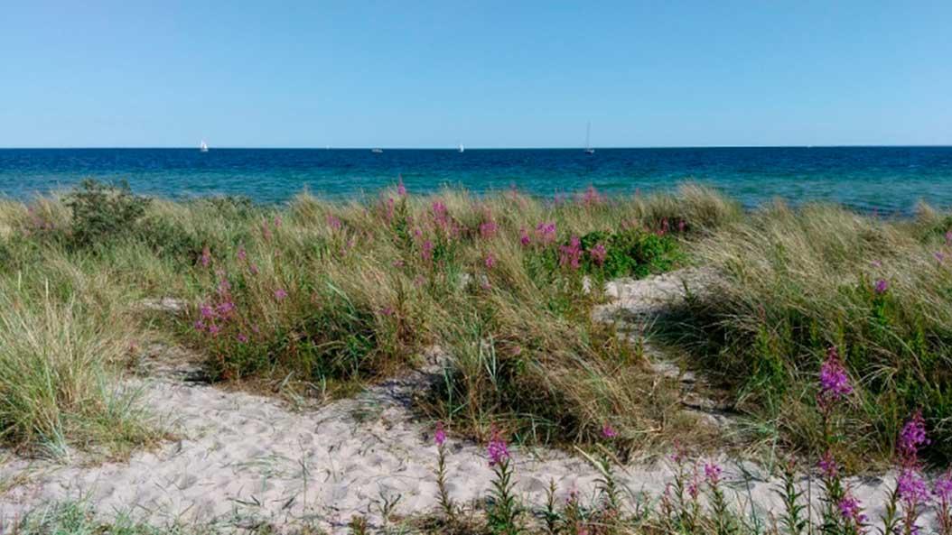 Strand sex fkk Strand: 15,867